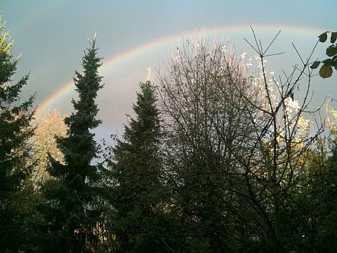 Tannenbäume mit Regenbogen