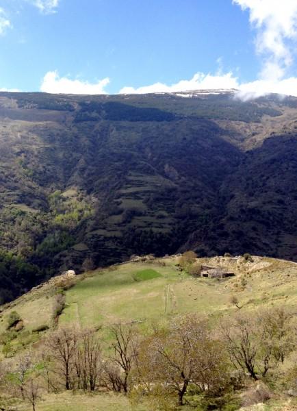 Feld irgendwo hinter Capileira