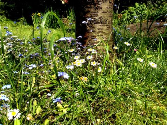Blumen unterm Kirschbaum