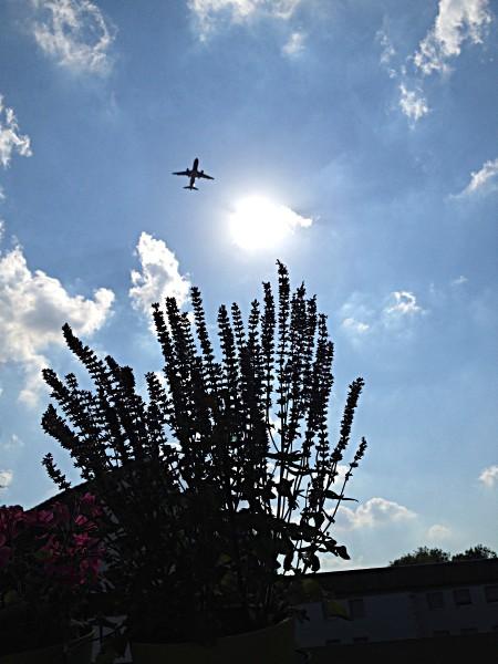 Ferienflieger im Gegenlicht