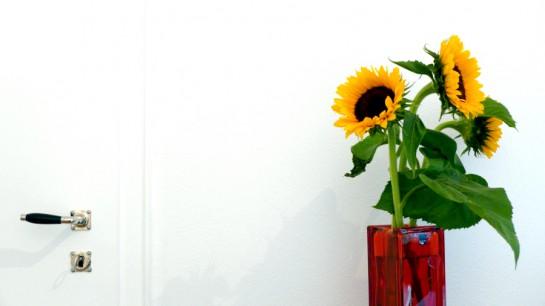 Türklinke an Sonnenblume