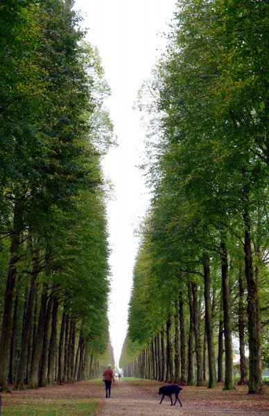 Soesterdijk: Baumbestandene Allee, Frau mit Hund