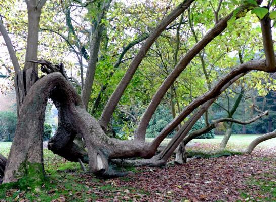 Soesterdijk: Liegender Baum im Park