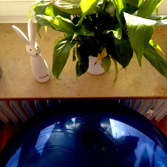 12 von 12: Gymnastikball mit Pflanze