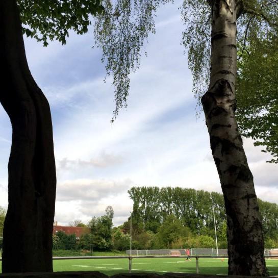 Dortmund-Schüren, Sportplatz, durch zwei Bäume hindurch fotografiert