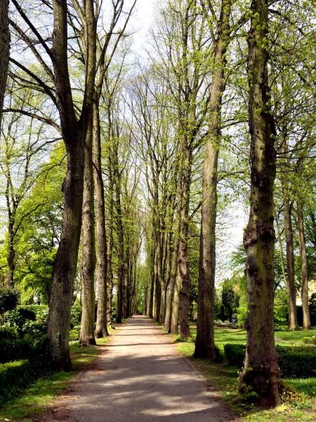 Dortmund-Schüren, Friedhof. Baumbestandene Allee.