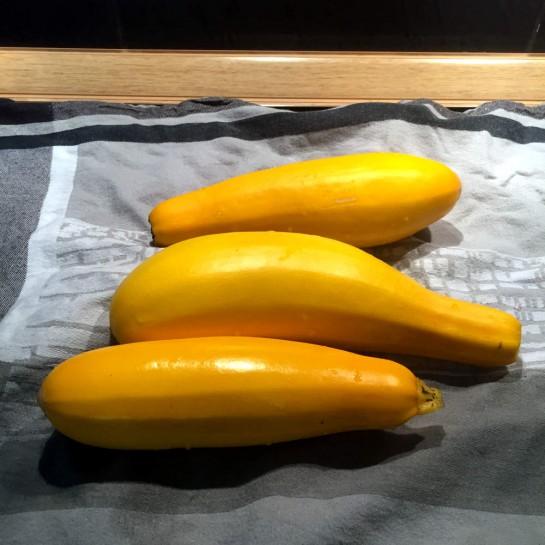 #12von12: Erste Zucchini aus dem Garten