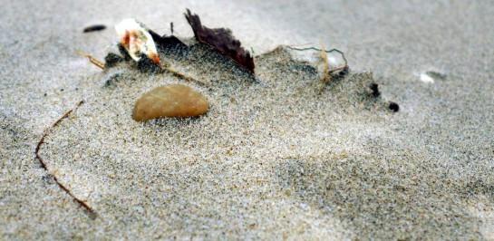 Ein gelber Stein und Gekröse im Sand