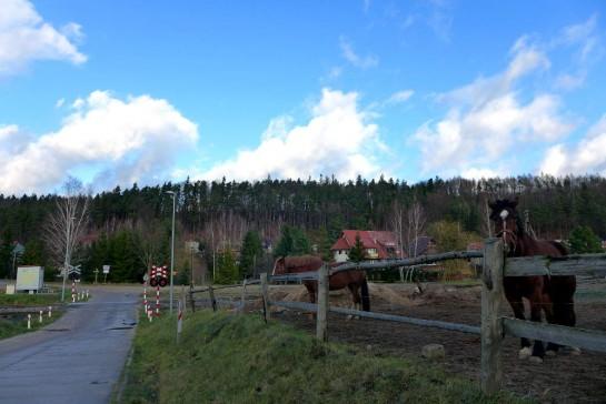 Pferde neben einem Bahnübergang
