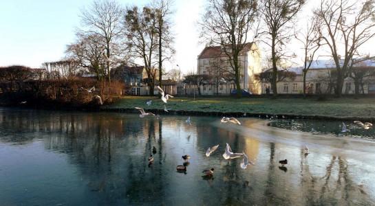 Park Oliwski: zugefrorener See mit Enten und Möwen