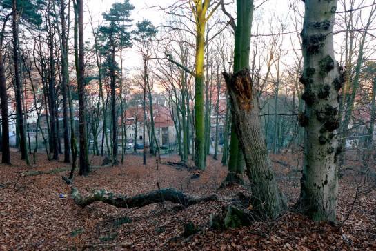 Oliwa: im Wald