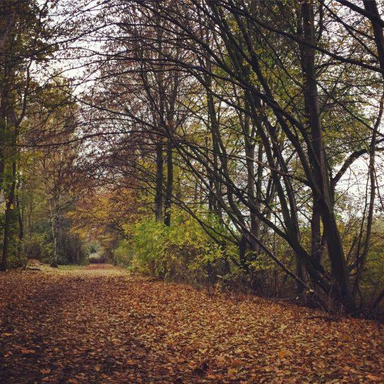 Herbstwald mit viel Laub auf der Erde