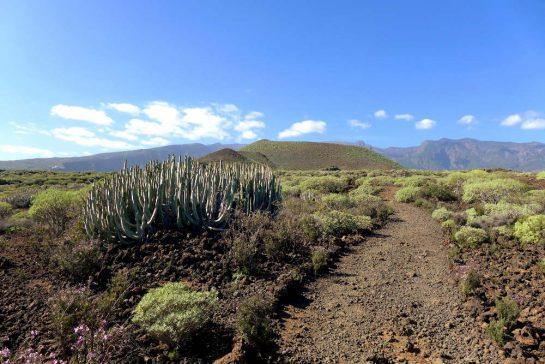 Weg auf Vulkanfläche mit Kakteen