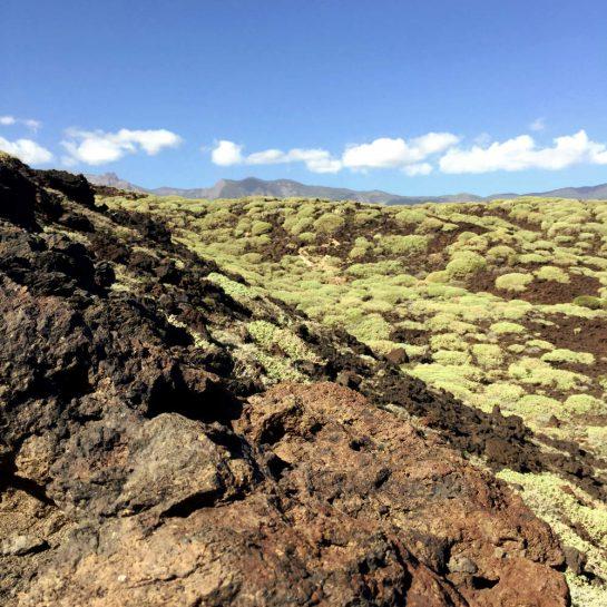 Vulkanfläche mit grünen Sträuchern