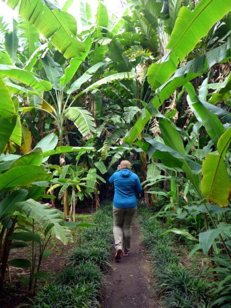 Im Bananenwald