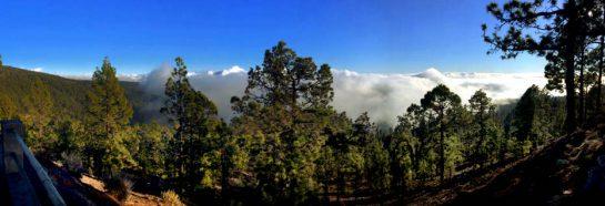 Teneriffa: Wolken kriechen in den Wald