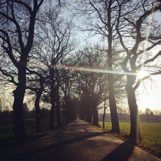 Büppel: Allee aus Eichenbäumen