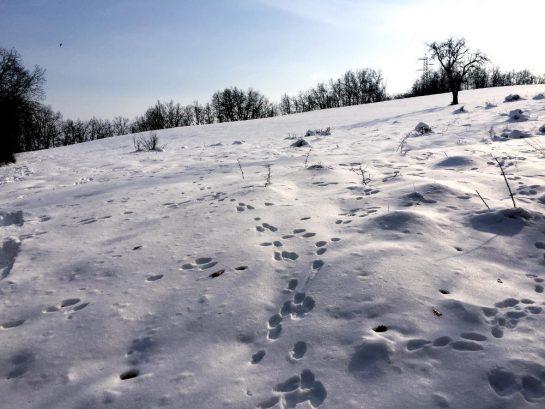 Rossena: Spuren von Rehen im Schnee