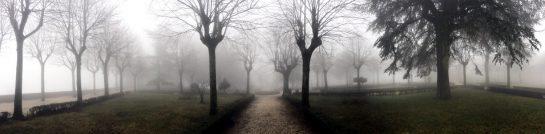 Garten der Päpste: Bäume im Scherenschnitt vor Nebel