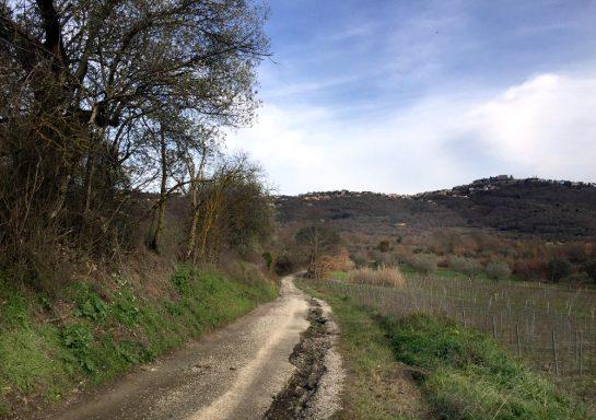 Strada Montarone: Schotterweg in Richtung Berg, rechts Weinreben