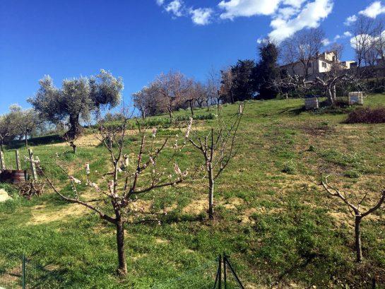 Ostbalkon mit Blick auf blühenden Kirschbaum
