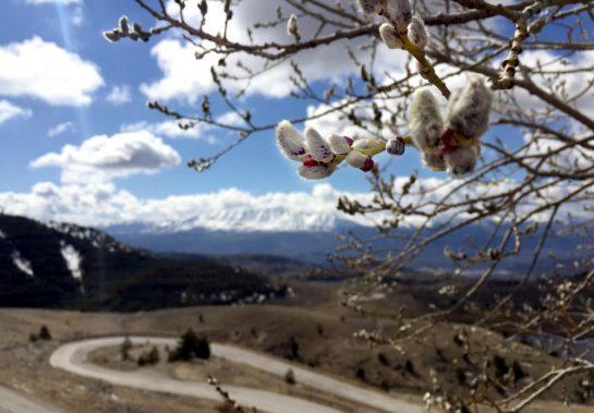 Gran Sasso: Blick ins Tal mit Weidekätzchen im Vordergrund
