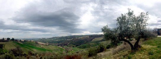 Commune di Penne: rechts ein Olivenbaum, Blick ins hügelige Tal, in der Ferne ein schneebedeckter Berg