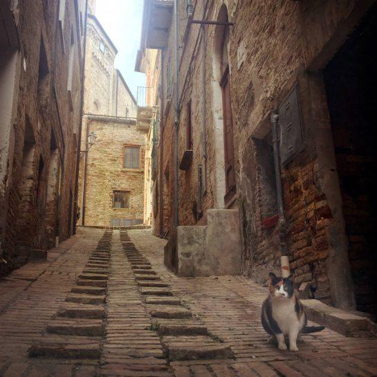 Gasse mit Katze