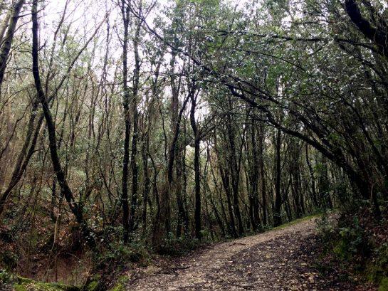 Monte Conero: Waldweg
