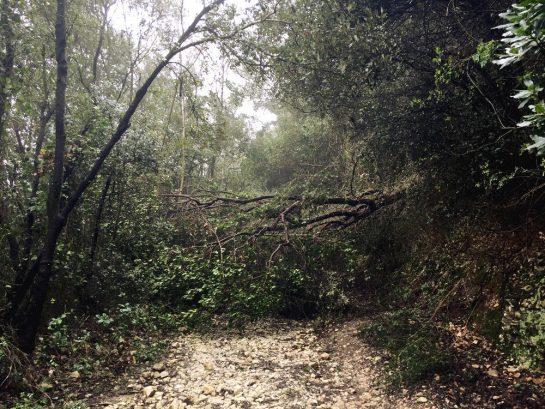 Monte Conero: Laubbaum auf dem Weg