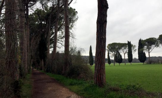 Abbadia Chiaravalle: Naturschutzgebiet - Allee mit Wieder