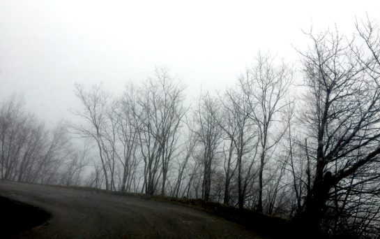 Straße im Nebel mit Bäumen als schwarze Schatten