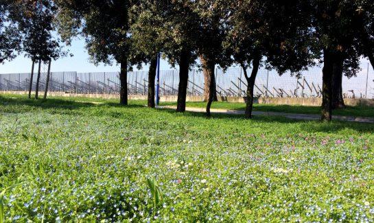 Rasen mit Blumen vor Baumreihe