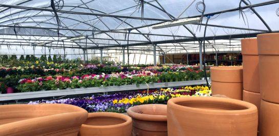 Gartenmarkt: Im Vordergrund Tontöpfe, dahinter Pflanzen