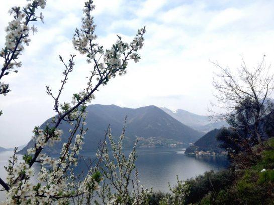 Monte Isola, Blick auf die Bergamasker Seite des Sees, blühender Busch