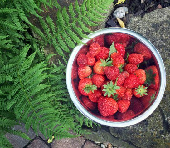 Farn und Schüssel mit Erdbeeren