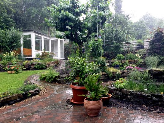 Garten mit Steinmauern und dichtem Bewuchs bei Platzregen, im Hintergrund Gewächshaus