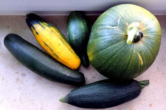 Letzte Ernte: 1 Kürbis, 4 Zucchini