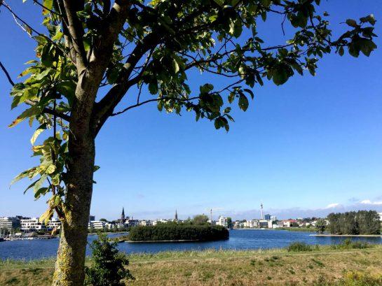 Blick auf den Phoenixsee, ein Baum im Vordergrund. Im Hintergrund: Dortmunder Skyline mit Fernsehturm.