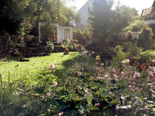 Garten, tief stehende Sonne, im Vordergrund Herbstanemonen