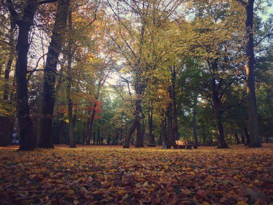 Von-Alten-Garten: bunter Herbstwald mit Laub