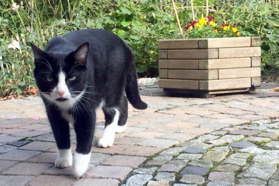Der schwarz-weiße Nachbarskater Moritz auf Augenhöhe