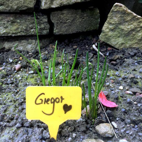 """Schnittlauch, der aus der Erde guckt. Davor ein Schild mit der Beschriftung """"Gregor"""" und einem Herz."""