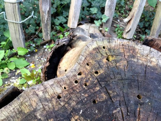 Kleine, runde Löcher im Baumstamm