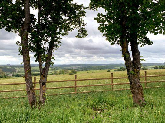 Blick zwischen zwei Bäume hindurch auf Felder.