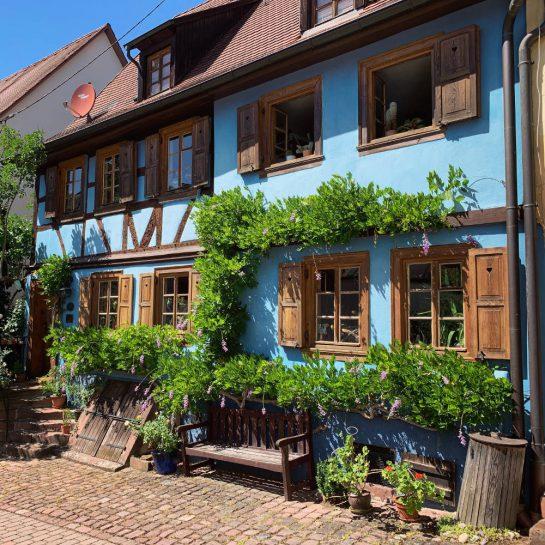 Blaues Haus mit Fensterläden, bewachsen von blühendem Zeug. Eine Holzbank steht davor.
