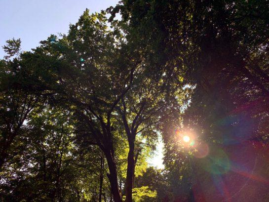 Blick in Baumkronen, durch die Sonne scheint