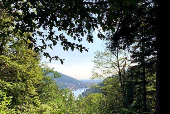 Blick durch Wald auf Heidelberg im Neckartal