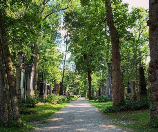 Allee mit Bäumen, links und rechts große Grabsteine