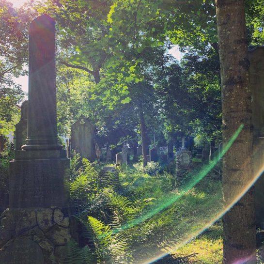 Grabsteine, Bäume, Farne, Lens Flares